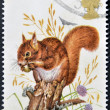 UNITED KINGDOM - CIRCA 1977: A Stamp printed in Great Britain celebrating British Wildlife, showing a Red Squirrel, circa 1977 — Stock Photo