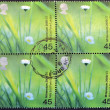UNITED KINGDOM - CIRC2000: Stamp printed in Great Britain shows Daisies (Mile End Park, London, circ2000 — Stock Photo #12365970