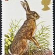 UNITED KINGDOM - CIRCA 1977: A Stamp printed in Great Britain celebrating British Wildlife, showing a Brown Hare, circa 1977 — Stock Photo