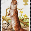 UNITED KINGDOM - CIRCA 1977: A Stamp printed in Great Britain celebrating British Wildlife, showing an Otter, circa 1977 — Stock Photo