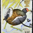 UNITED KINGDOM - CIRC1980: stamp printed in Great Britain shows moorhen, circ1980 — 图库照片 #12366059