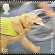 UNITED KINGDOM - CIRCA 2008: A stamp printed in Great Britain shows assistance dog, circa 2008 — Stock Photo