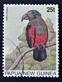 PAPUA NEW GUINEA - CIRCA 1996: A stamp printed in Papua shows Pesquet's Parrot (Psittrichas fulgidus), circa 1996 — Stock Photo