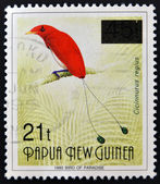 PAPUA NEW GUINEA - CIRCA 1993: A stamp printed in Papua shows bird of paradise, cicinnurus regius, circa 1993 — 图库照片