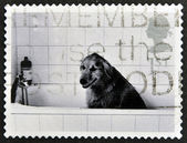 UNITED KINGDOM - CIRCA 2001: A stamp printed in Great Britain shows Dog in Bath, circa 2001 — Stok fotoğraf
