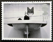 UNITED KINGDOM - CIRCA 2001: A stamp printed in Great Britain shows Cat in Washbasin, circa 2001 — Stock Photo
