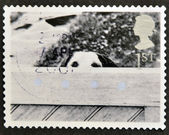 UNITED KINGDOM - CIRCA 2001: A stamp printed in Great Britain shows Dog Behind Fence, circa 2001 — Stock Photo