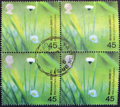 UNITED KINGDOM - CIRCA 2000: Stamp printed in Great Britain shows Daisies (Mile End Park, London, circa 2000 — Stock Photo