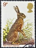 Regno Unito - circa 1977: un timbro stampato in Gran Bretagna celebra britannico della fauna selvatica, mostrando una lepre marrone, circa 1977 — Foto Stock