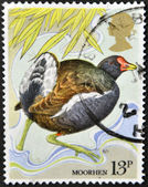 UNITED KINGDOM - CIRCA 1980: A stamp printed in Great Britain shows a moorhen, circa 1980 — Stock Photo