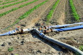 Water pipes used for watering tomatoes rows in a field — Stock Photo