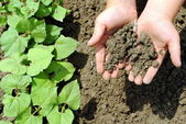 Kid hands with soil in the garden — Stock Photo