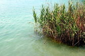 Green grass close to a limpid lake — Stock Photo