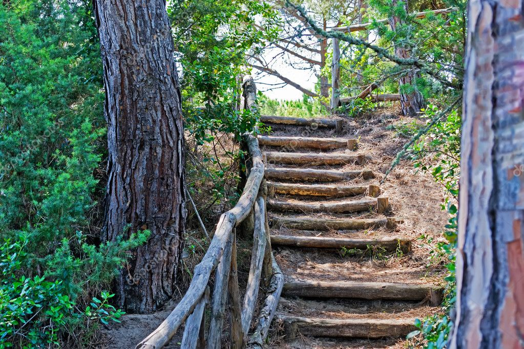 Stairway in a pinewood — Stock Photo #11108365