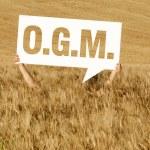 Cornfiled O.G.M. — Stock Photo #10993634