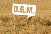 Cornfiled O.G.M. — Stock Photo