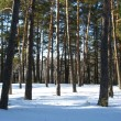 Stock Photo: Winter landscape in forest