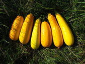 Six yellow squashes — Stock Photo