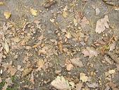 Bolotas com folhas no chão — Foto Stock