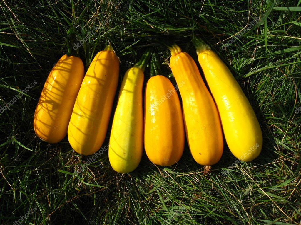 Harvest of yellow squashes on the grass — Stock Photo #11843907