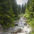 Torrent in Val Brembana — Stock Photo