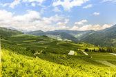 Val di Non (Trento) — Stock Photo