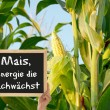 Corn, the energy grows — Foto de stock #11878478