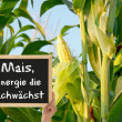 Corn, the energy grows — Stockfoto