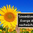 Sunflower, the energy grows — Stockfoto