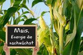 Corn, the energy grows — Stock Photo