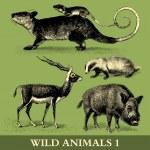 Wild Animals — Stock Vector #11940266