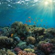 Coral reef — Stock Photo #10898142