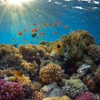 Coral reef — Stock Photo #10915078