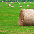 Rolls of straw — Stock Photo