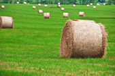 Rolls of straw — Stock Photo