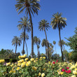 Palm trees and flowers in Maria Luisa Park. Seville, Andalusia, Spain - Stock Photo