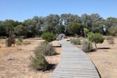 Wooden walkway in the Doñana National Park, Andalusia Spain — Stock fotografie