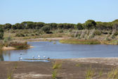 Wetlands in Doñana National Park, Andalusia Spain — Stock Photo
