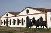 奥斯本在 el 波多黎各圣玛丽亚,安达卢西亚西班牙雪利酒酒窖 — 图库照片
