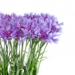 Cornflower flowers bouquet isolated on white background — Stock Photo #10956844