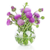Beautiful purple burdock wild flowers in vase isolated on white — Stock Photo