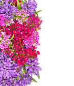 Many beautiful flowers background — Stock Photo