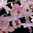 Stock Photo: Colorful orchid flowers