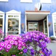 Pretty flowers in front of Europeshop — Stock Photo #12280314