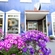 Pretty flowers in front of a European shop — Stock Photo