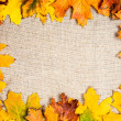 Autumn frame on canvas — Stockfoto