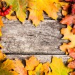 Stock Photo: Autumn frame with ashberry