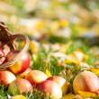 Stock Photo: Red apples in autumn garden