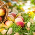 Basket full of red apples — Stock Photo