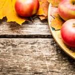 Autumn background — Stock Photo #10909748